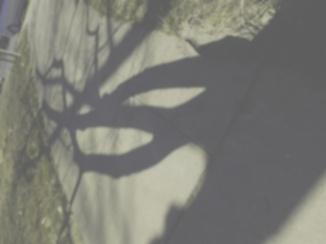 Tree shadow, dog view