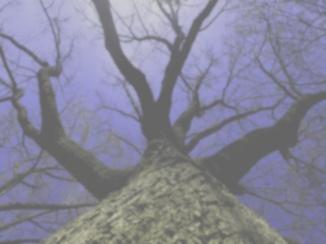 Tree, dog view