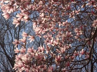 Magnolia, human view