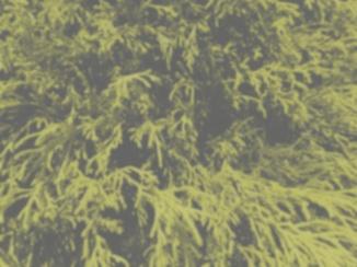 Yellow shrup, dog view