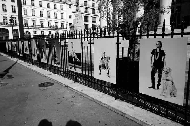 B&W Fence4