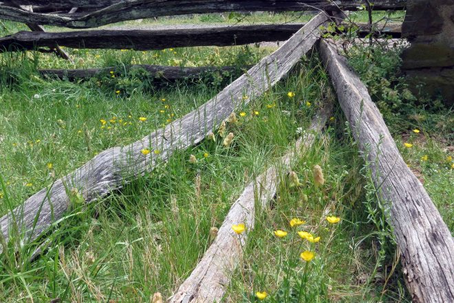 Fence with Flowers (c)