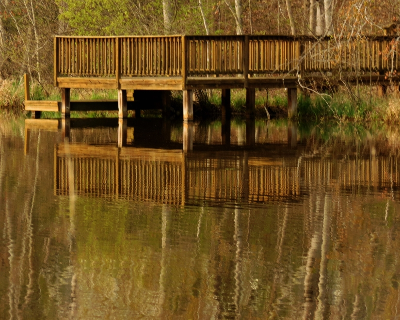 Reflections on Oak RidgeLake