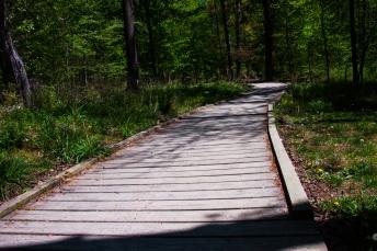 Board path