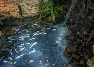 Pond in La Fontana