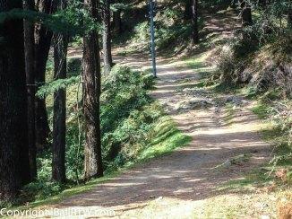 Wild Strawberry Trail