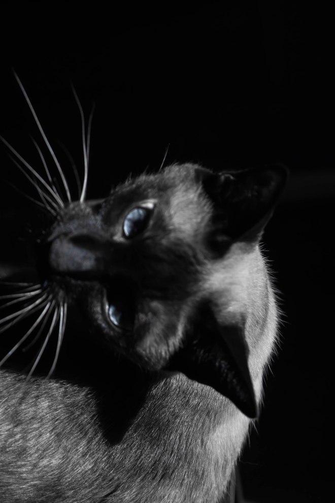 cat_bw