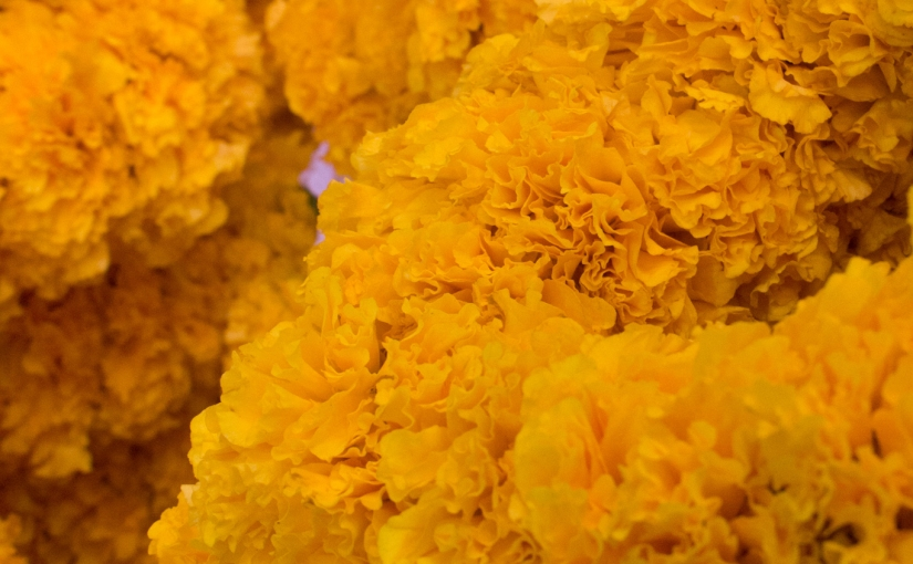 Bangkok Flower Market: Color Me Yellow