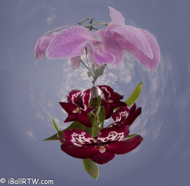 iBallRTW - Flower Planet