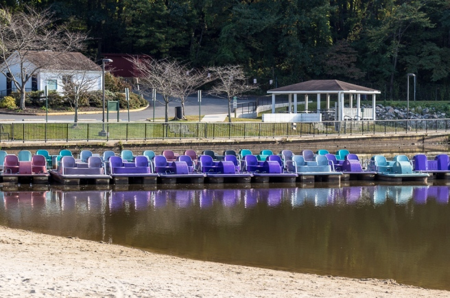 Purple Paddle Boats in the Park