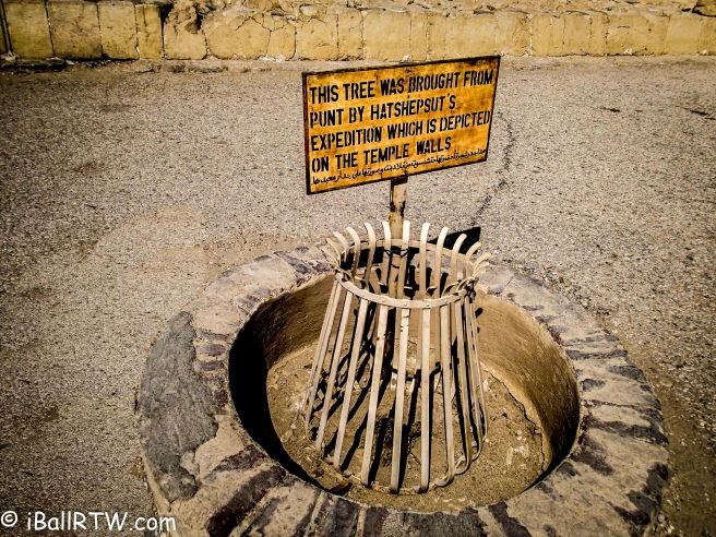 Hatshepsut's MyrrhTree
