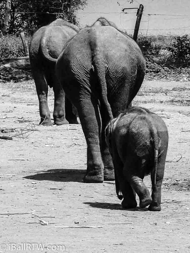 Elephants at the Elephant Transit Home