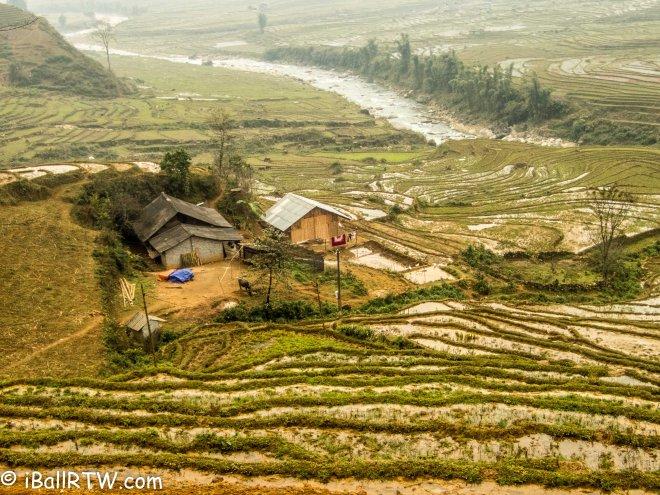 Sa Pa Rice Paddy