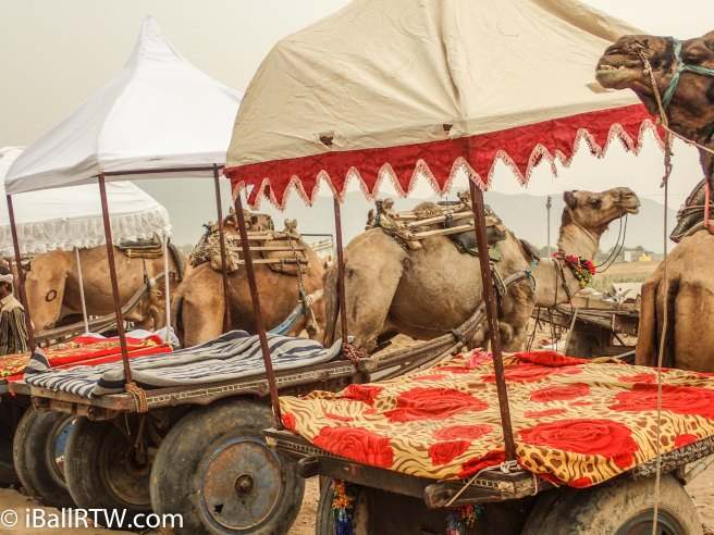 Camel Carts at Pushkar
