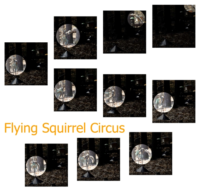 Flying Squirrel Circus